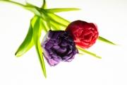 Tulip Tabletop 4