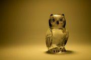 Glass Owl 3