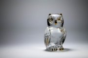 Glass Owl 4