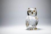 Glass Owl 5