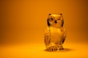Glass Owl 6