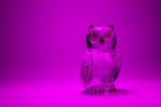 Glass Owl 7