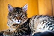 Cat Portrait 4
