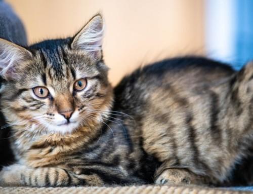 Project 299: Cat Portraits